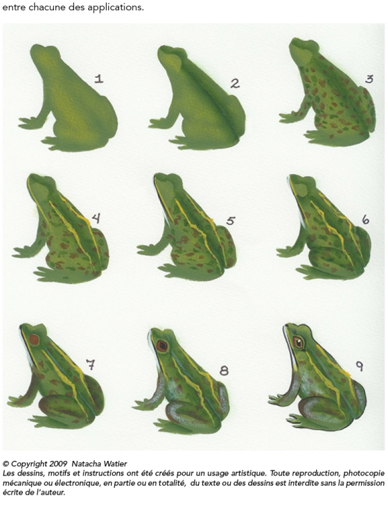 GRENOUILLE5